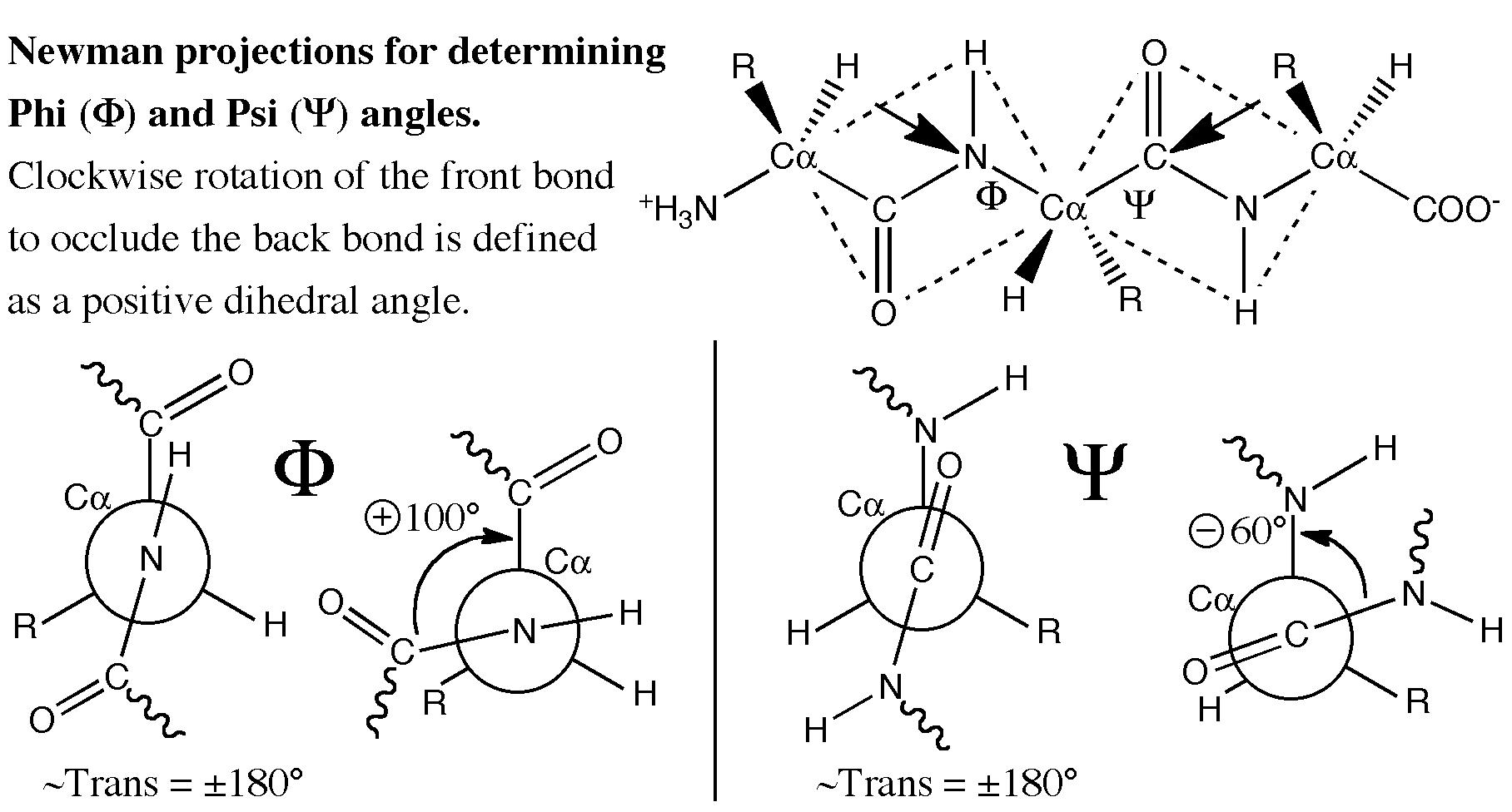 graphical ramachandran diagram